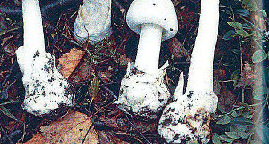 Роспотребнадзор сказал, как неотравиться грибами