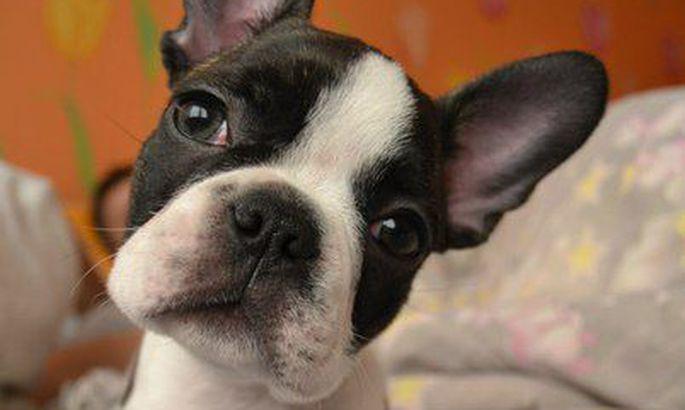 1007d33d453 W3 uudised - Lugeja kirjutab: koer on mõned kassi kombed omaks võtnud