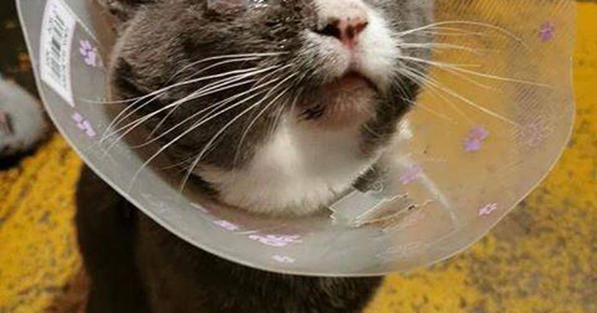 Sadist vigastas kassi silma