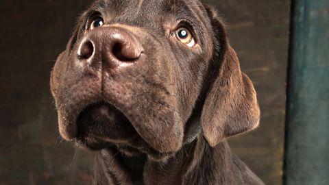 Koerad tajuvad omanikes väiksemaidki muutusi.