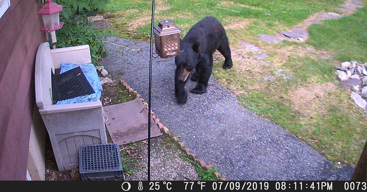 Uskumatud kaadrid: surmapõlgurist koer kihutas aeda luusima tulnud karu pikema jututa minema