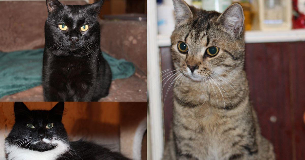 Aita abivajajaid: tänavatelt päästetud kasse Täppi, Maxi ja Piiat kimbutab ühine probleem