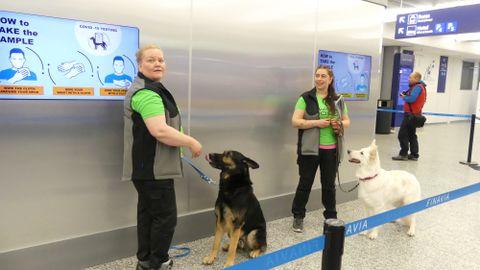 Helsingi lennujaama koerad