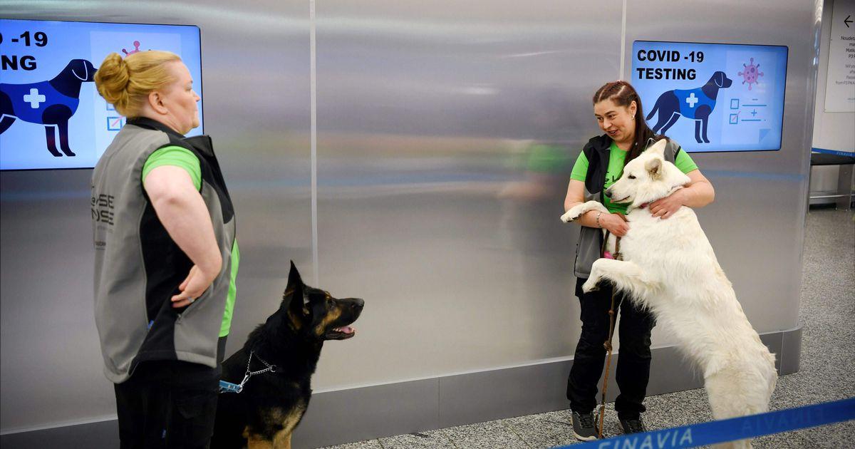 GALERII  Soome koroonaviiruse tuvastamise katsed koertega olid...