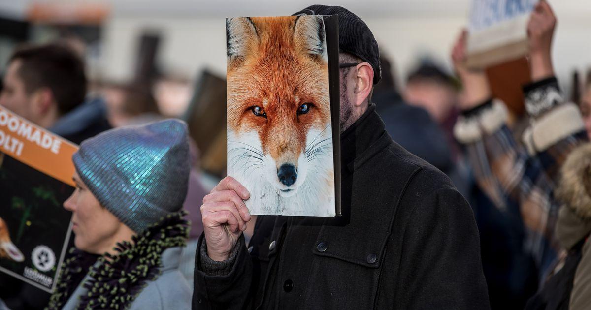 Loomakaitsjad jätkavad võitlust karusloomafarmide sulgemise eest