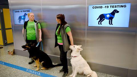 Koroonakoerad Valo ja E.T. koos koerajuhtidega Helsingi lennujaamas.