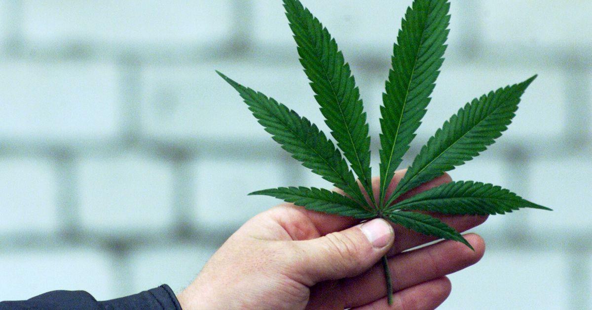 Для чего хорошо марихуана распад марихуаны