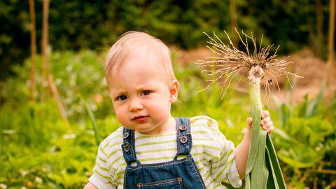 Lastearstide otsus ei keela veganismi.