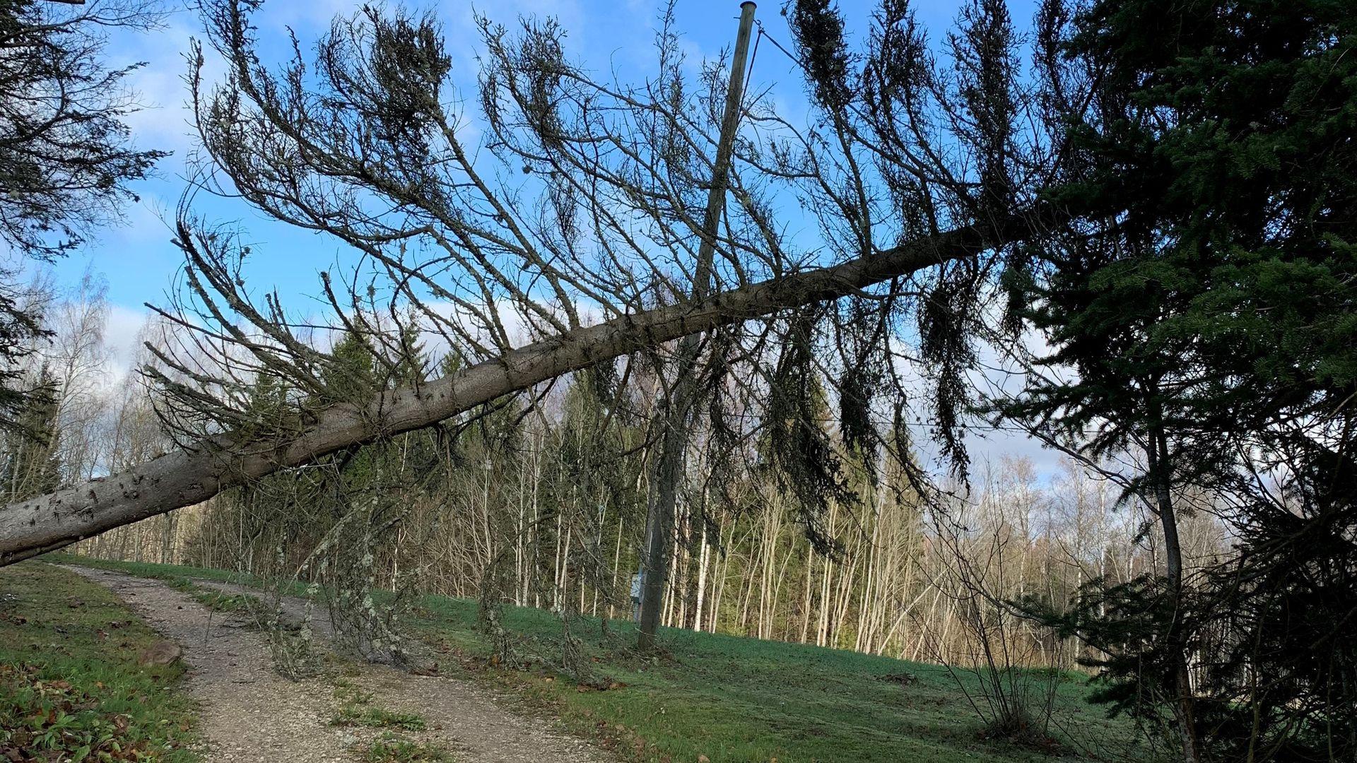 Tormituuled jätsid vooluta ka mitmed Lõuna-Eesti majapidamised