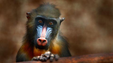 Anna oma hääl eksootiliste loomade kaitseks