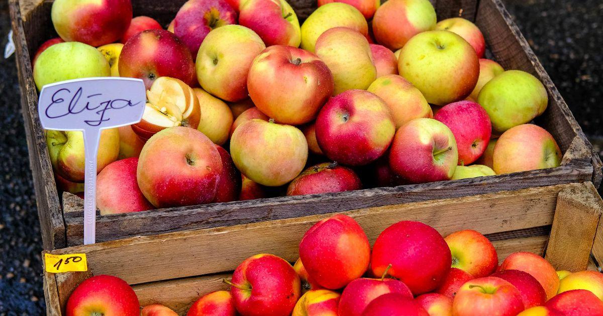 Õunaaed ootab taasiseseisvumispäeval õunu