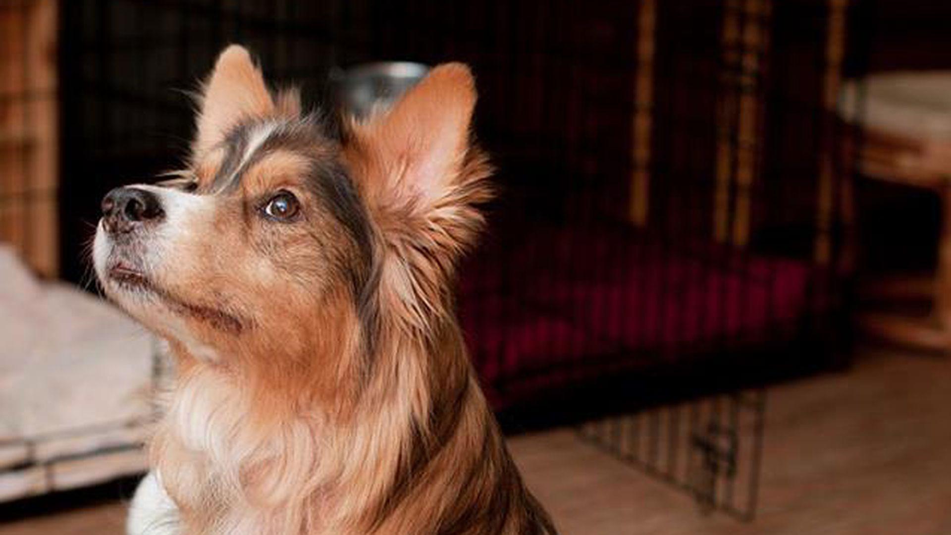 Tartumaal kadunuks jäänud koera mälestusest sündis Eestis ainulaadne ettevõtmine: