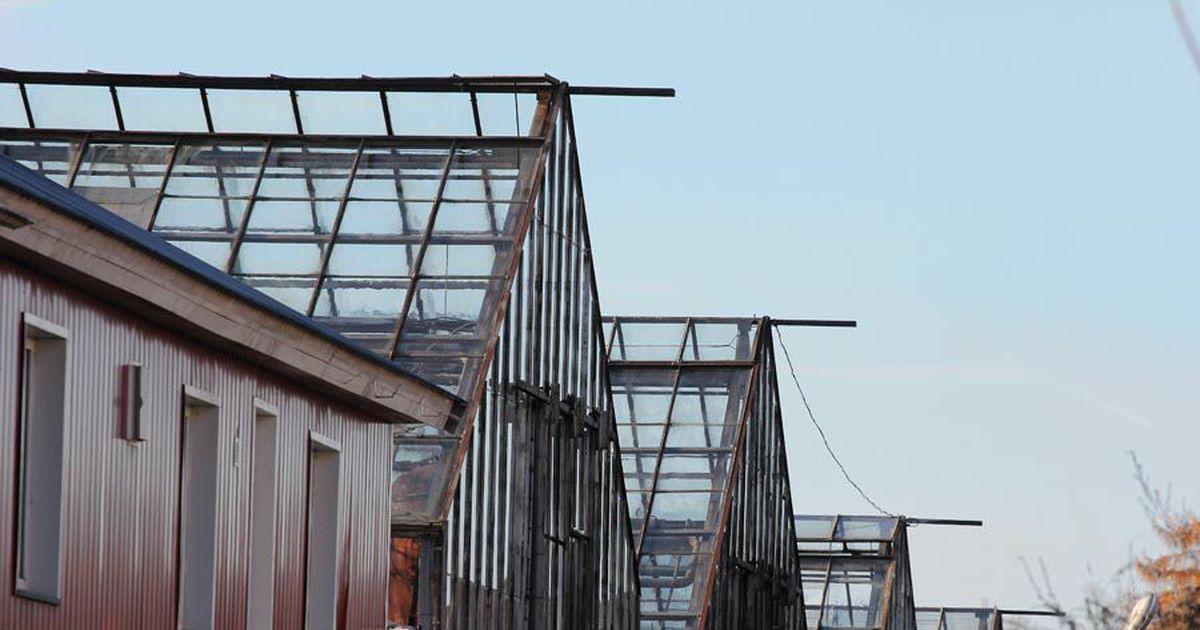Kösti aiandi kasvuhoonetele seatakse moodsad katused