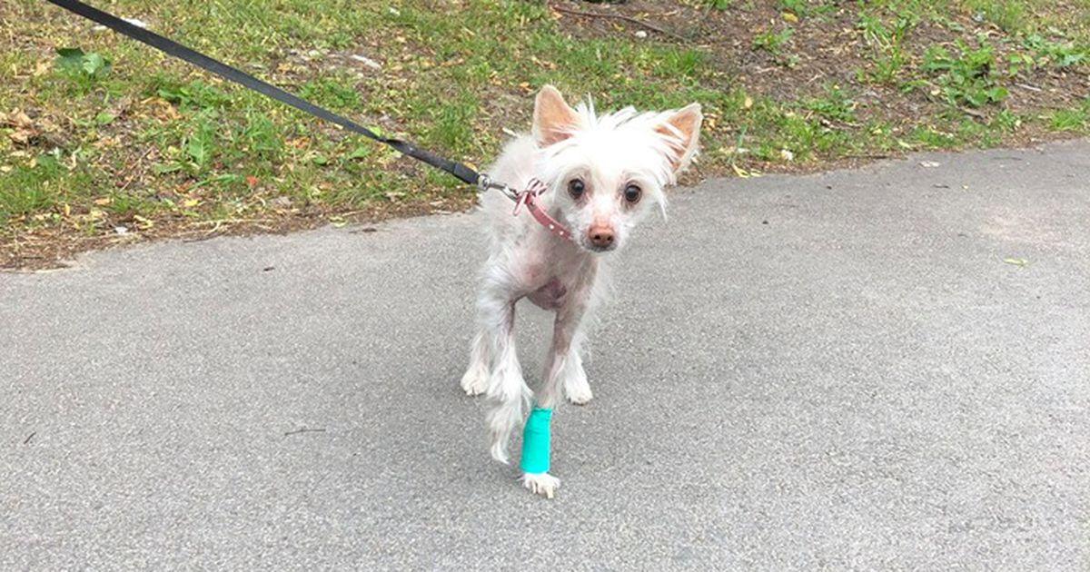 Lasnamäe naine jättis lahtise luumurruga koera nädalaks piinlema