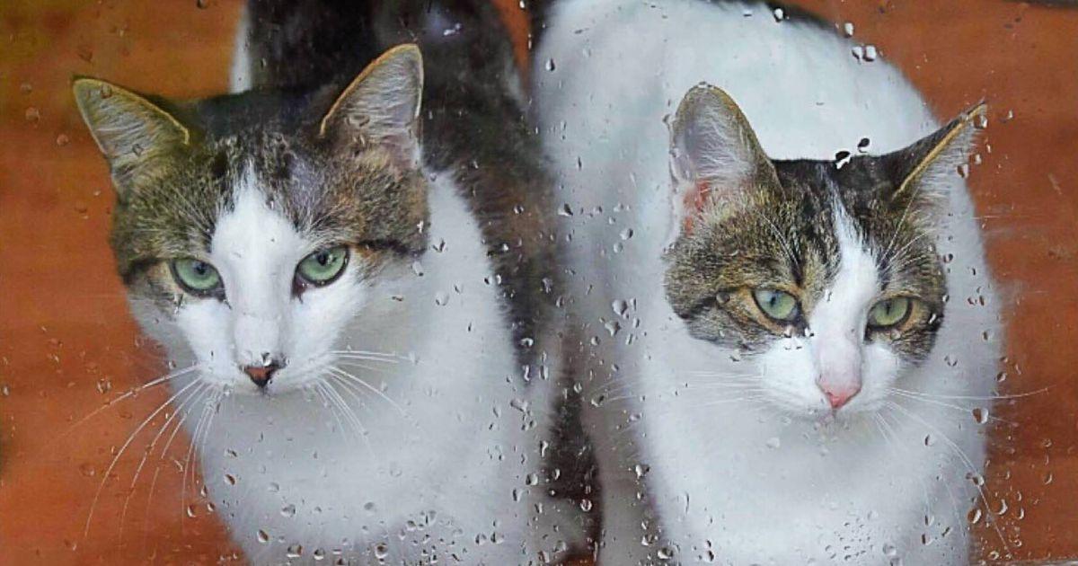 Päevakäpp: südamesõbrad Kiti ja Paul ootavad üheskoos uut tulevikku