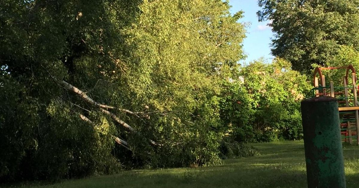 Valka lasteaias murdus puu pooleks