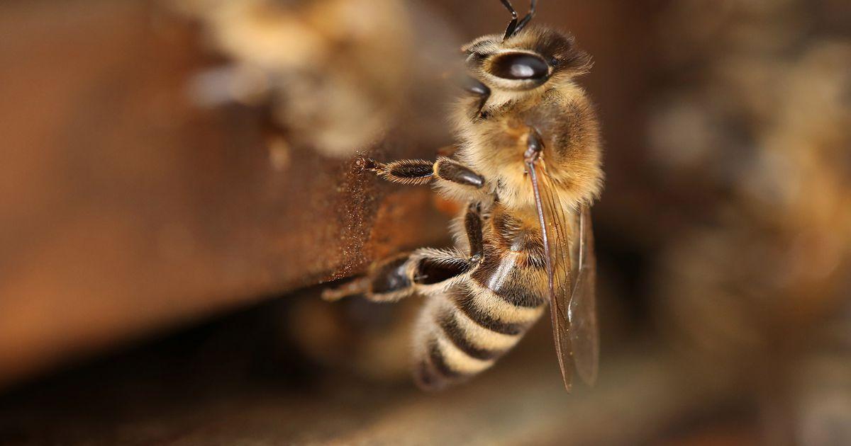 Avastus: mesilased oskavad arvutada